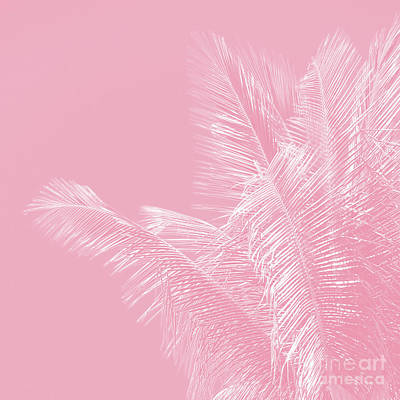 Photograph - Millennial Pink Illumination Of Heart White Tropical Palm Hawaii by Sharon Mau