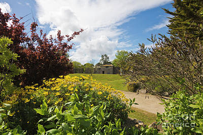 Photograph - Millpond Gardens Hayle by Terri Waters