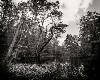 Photograph - Milltail Creek 2 by Alan Raasch