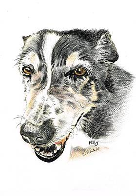 Drawing - Milly Sheepdog by Teresa White