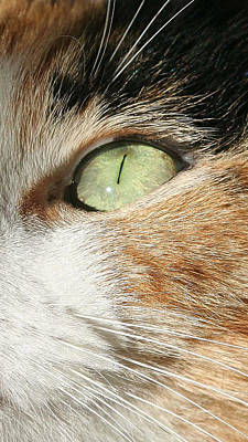 Wall Art - Photograph - Milly's Eye by Mary McGrath