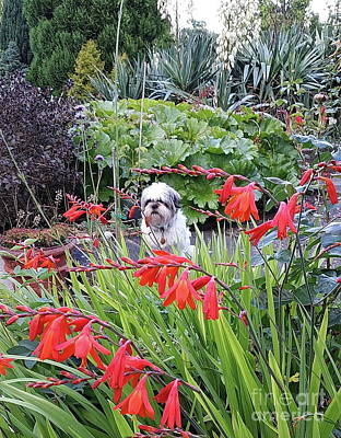 Photograph - Milo The Gardener by Val Byrne