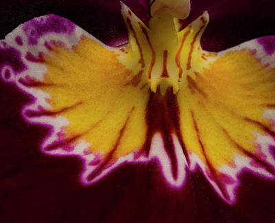 Photograph - Miltonia Detail by Jean Noren
