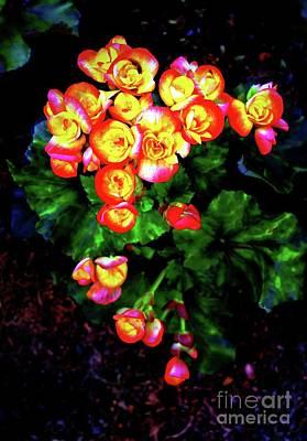 Photograph - Mimi Roses by Ian Gledhill