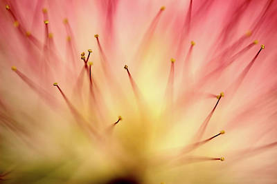 Photograph - Mimosa 4 by Mike Eingle