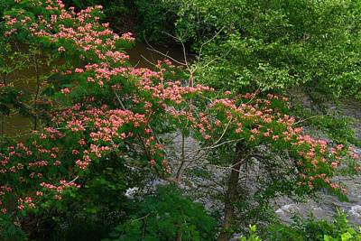 Mimosa On The Dan River Art Print