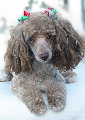 Pup Digital Art - Mimzy Doesn't Like The Groomers by Sabrina K Wheeler