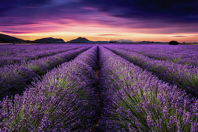 Photograph - Mindfulness by Jorge Maia