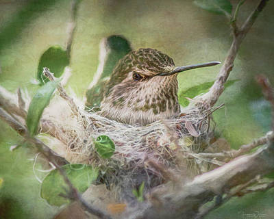 Mixed Media - Minding The Nest by Teresa Wilson