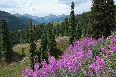 Photograph - Mineral Basin Fireweed Landscape by Cascade Colors