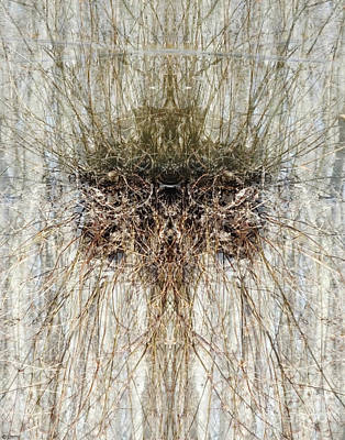 Photograph - Mineral Slough Swamp Thing Ghost River Lagrange Tn by Lizi Beard-Ward