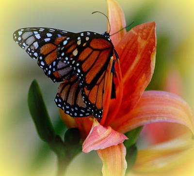 Photograph - Mingle With A Monarch by Kimberly Woyak