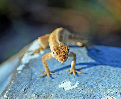 Lizards Photograph - Mini Attitude by Kenneth Albin