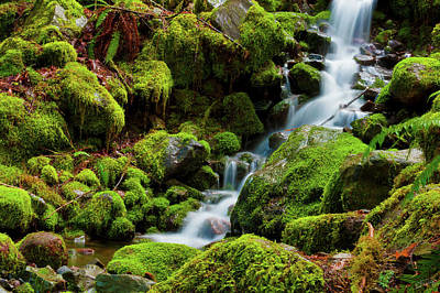 Photograph - Mini Cascading Waters by Dee Browning