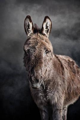 Miniature Donkey Photograph - Mini Donkey by Leah McDaniel