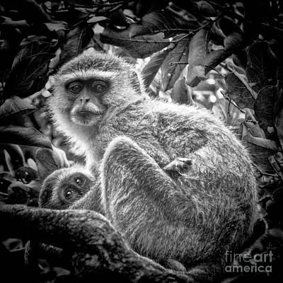 Photograph - Mini Me Monkey by Karen Lewis