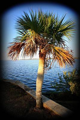 Photograph - Mini Palm by Mandy Shupp
