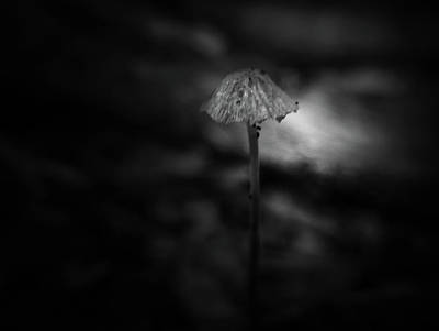 Photograph - Mini Shroom by Keith Elliott