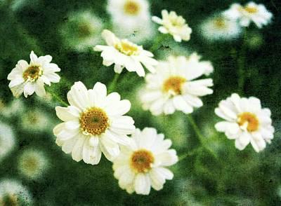 Mini Spring Daisy's Art Print by Cathie Tyler