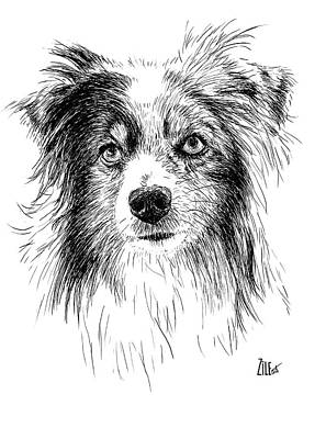Digital Art - Miniature Australian Shepherd Dog @boo.boo.blue by ZileArt