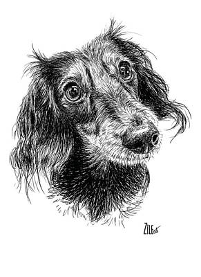 Digital Art - Miniature Dachshund Long-haired @pandora_theminidoxie by ZileArt