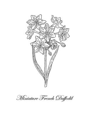 Drawing - Miniature Daffodil Botanical Drawing Black And White by Irina Sztukowski