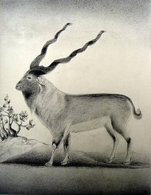 Miniature Drawing Of Oryx Art Print by Caroline  Urbania Naeem