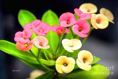 Italian Landscape Mixed Media - Miniature Flowers by Garland Johnson