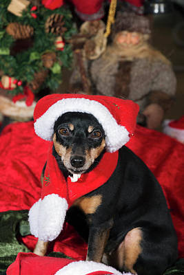 Art Print featuring the photograph Miniature Pinscher Wishing A Merry Christmas by Christian Lagereek