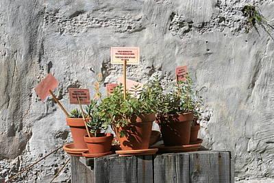 Art Print featuring the photograph Miniature Plants For Sale by Shirin Shahram Badie