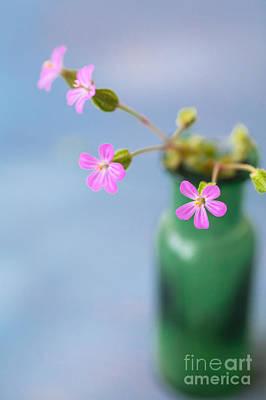 Photograph - Miniature Posy by Jan Bickerton