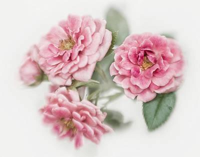 Photograph - Miniature Rose I by David and Carol Kelly