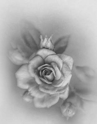 Photograph - Miniature Rose In Monochrome by David and Carol Kelly
