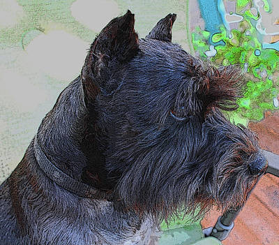 Photograph - Miniature Schnauzer Sitting On The Deck by Barbara Dean