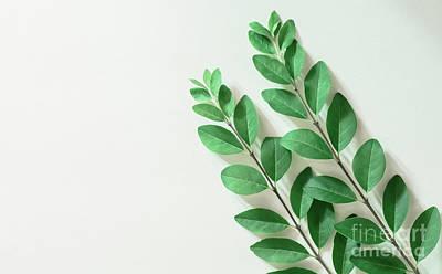 Photograph - Minimal Green by Andrea Anderegg