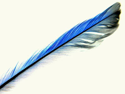 Photograph - Minimalism Feather Bluebird Gift 2 by Kathy Barney