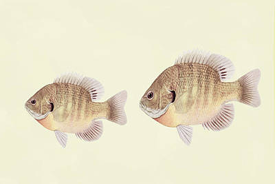 Minimalism Fish Wall Art Art Print