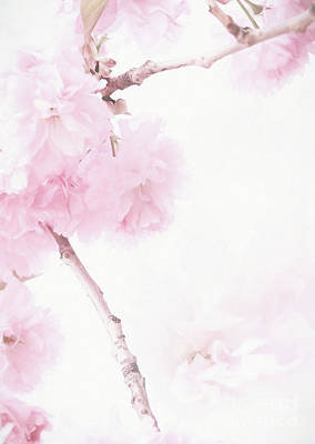 Photograph - Minimalist Cherry Blossoms by Anita Pollak