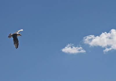 Photograph - Minimalist Seagull by Bob Slitzan