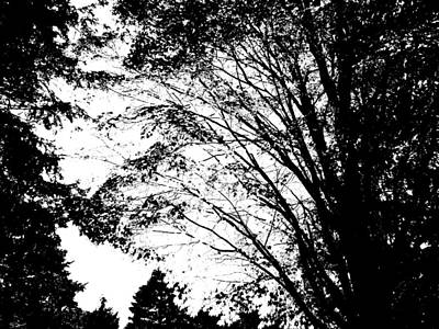 Quality Photograph - Minimalist Trees Silhouette by Abstract Angel Artist Stephen K