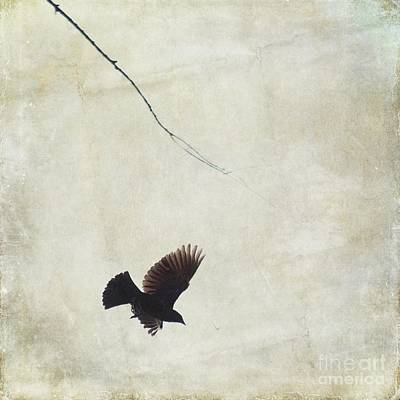 Print featuring the photograph Minimalistic Bird In Flight  by Aimelle
