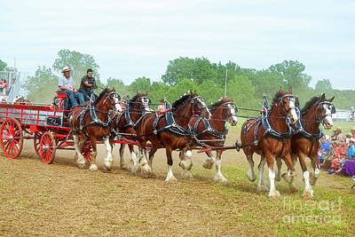 Photograph - Clydesdales by David Arment
