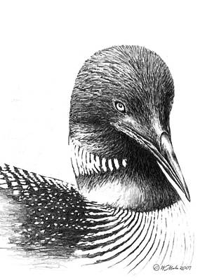 Loon Drawing - Minnesota Loon by William Martin