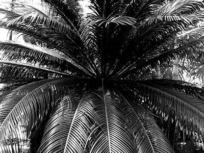 Photograph - Minnesota Palm Tree  by Will Borden
