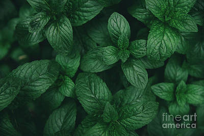 Photograph - Mint Green Leaves Pattern Background by Jelena Jovanovic