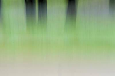 Photograph - Mint Slice by Jeff Mize
