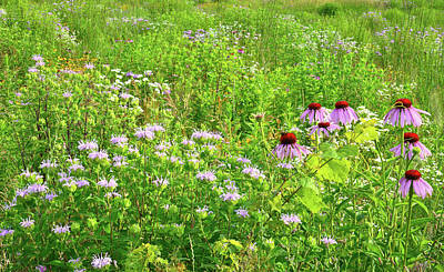 Photograph - Mints And Coneflowers At Moraine Hills by Ray Mathis