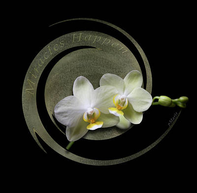Photograph - Miracles Happen - Orchid Twist by Patti Deters