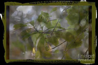 Photograph - Mirage by Ella Kaye Dickey