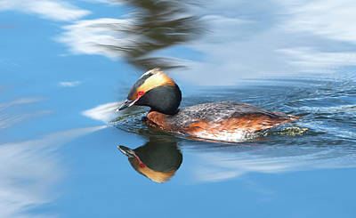 Photograph - Mirror Mirror by Doug Lloyd
